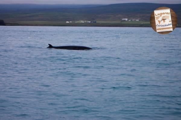 Dettifoss yHúsavik norte de Islandia