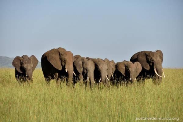 Explorando el Serengeti (II)