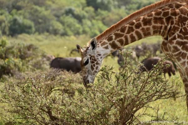 Tanzania: de safari por África
