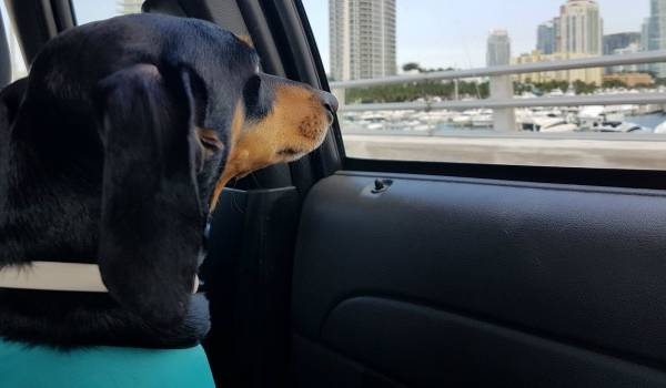 Guía para Viajar con Perro en Avión [Todo lo que necesitas saber]